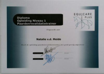 Equicare level 1