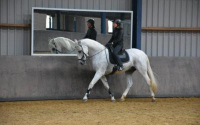 Rehabilitation horse: now what?